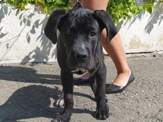 Более 100 собак чипировано в Горно-Алтайске